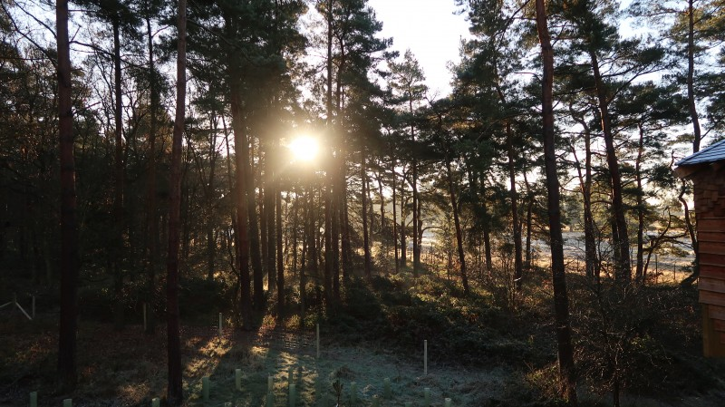 View from the treehouse at Center Parcs Elveden Forest - Center Parcs Treehouse Christmas Break 2016 - My review of our treehouse stay at center parcs Elveden Forest