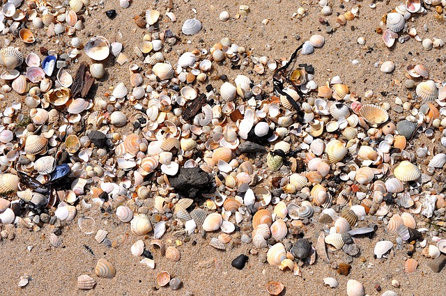 Coastal Style Interiors That Celebrate The Norfolk Coast shells on the beach create a mural or art interior inspiration bring the outside in