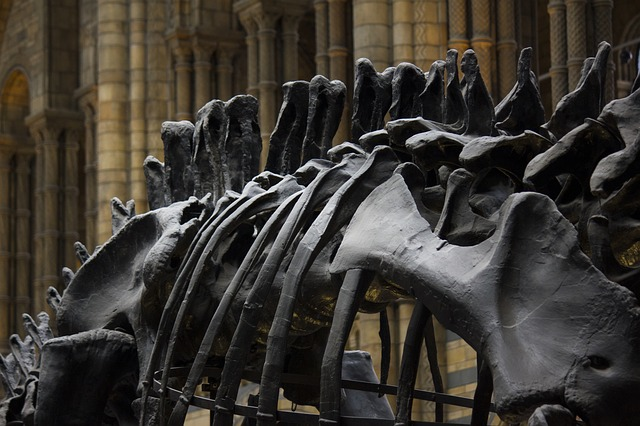 travel things to do in london on a budget with kids free museum natural history science