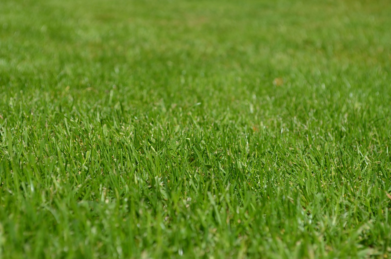 Home Maintenance Tips To Impress The Neighbourhood lush green lawn rid of fungus clover